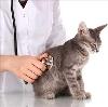 Ветеринарные клиники в Елецком